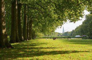 field in london
